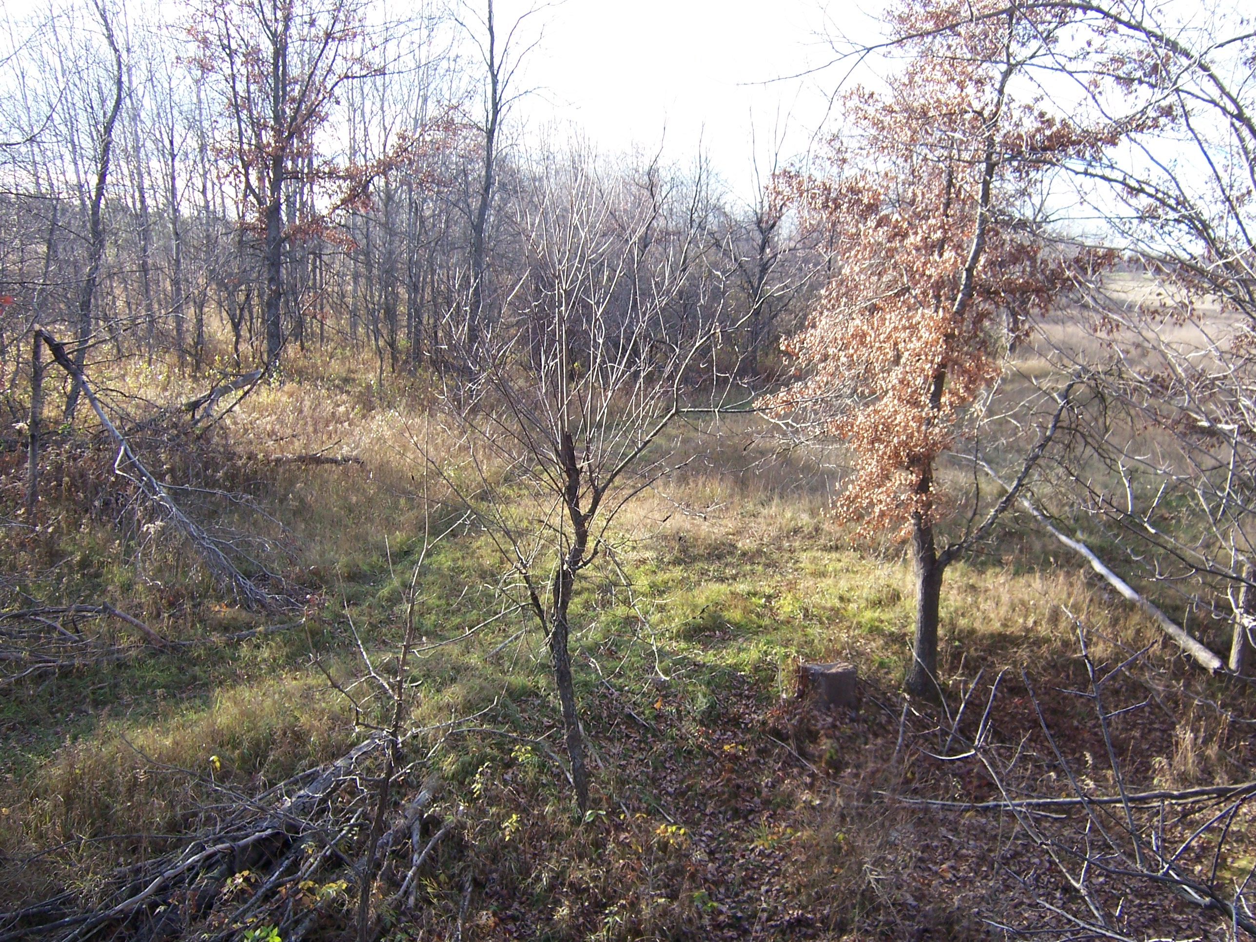 The narrow end of this field creates a funnel that the deer use to enter and exit the field.  Find the 'void' and you can have a dynamite stand location.