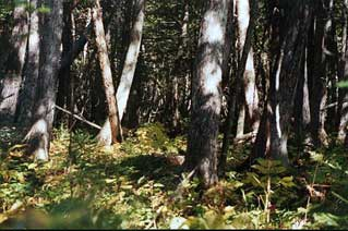 2001 bear pic2