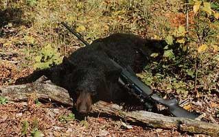 2001 bear pic4