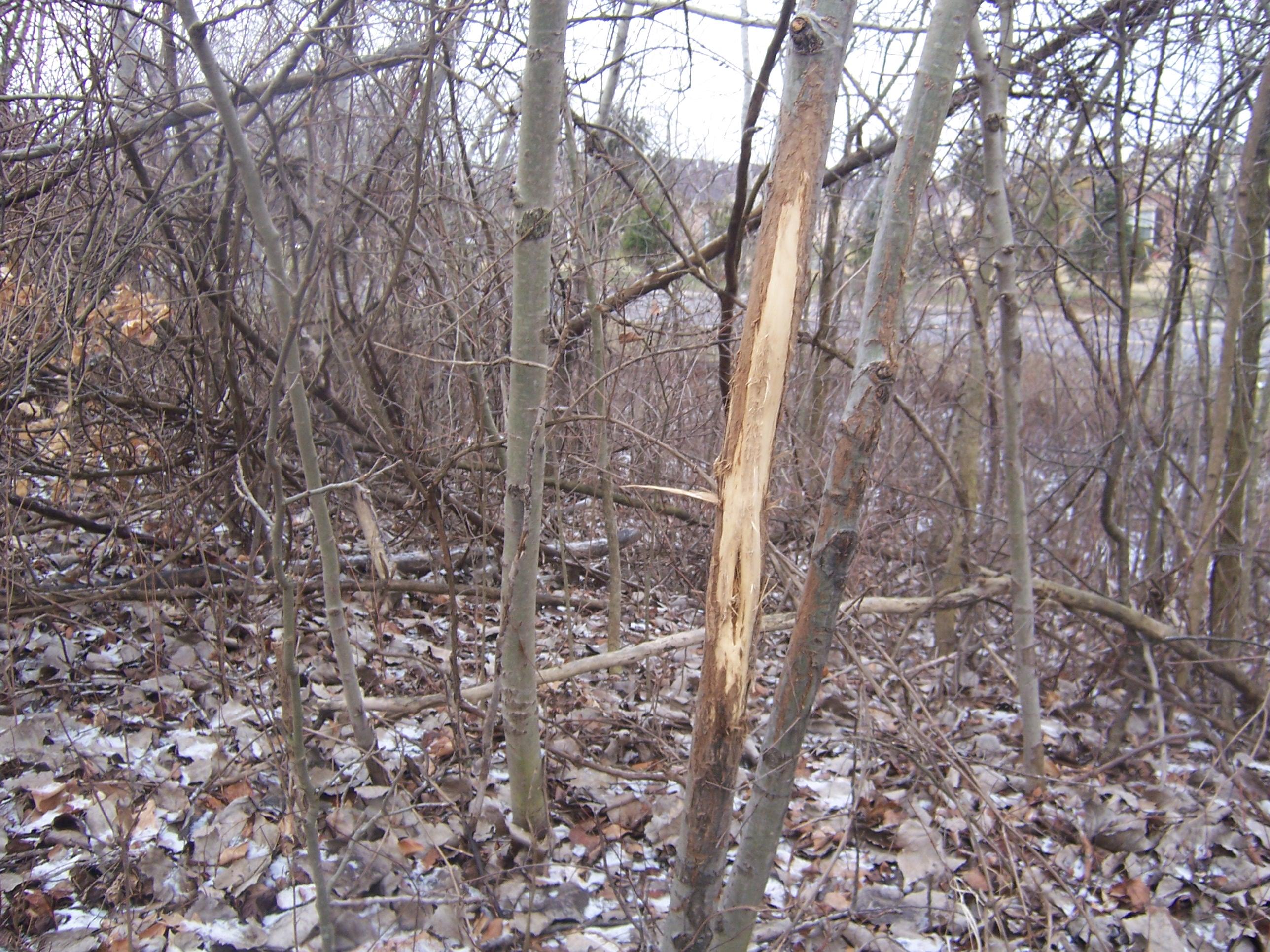 2012 rub macomb woods