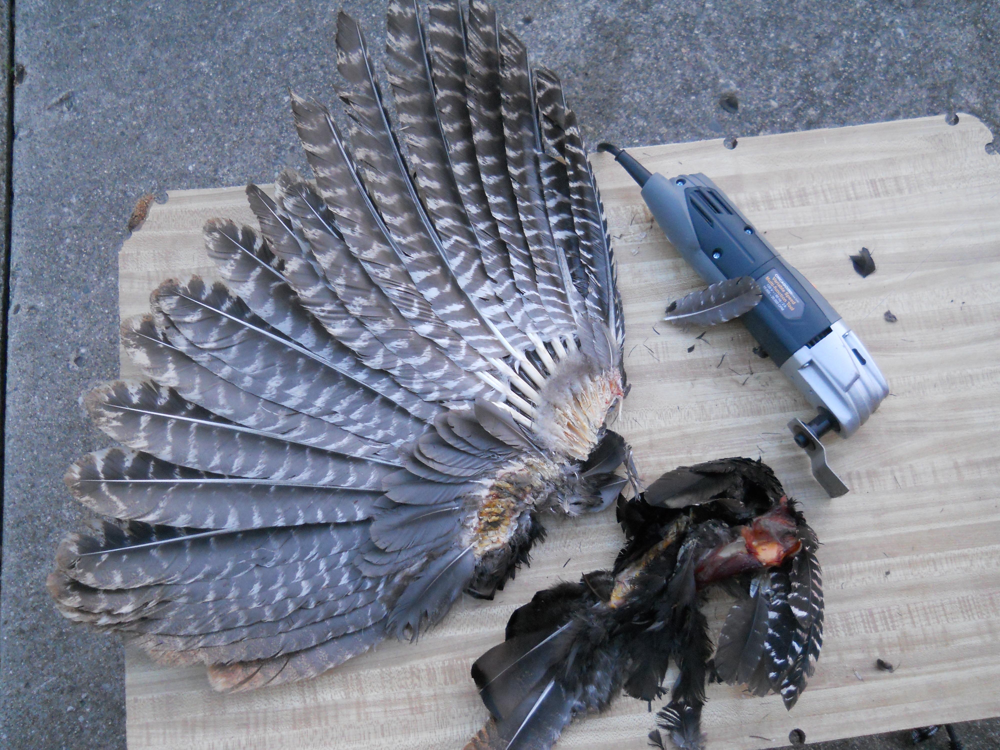 2012 split wing