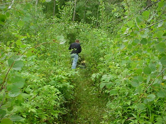 8-13-11 plot trail (2)