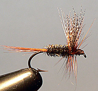 Cabin Coachman Fly Pattern