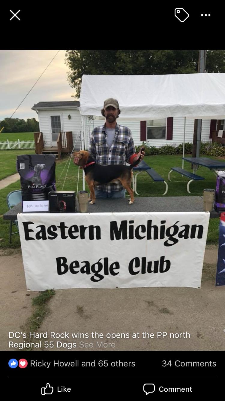 Akc Beagle Pups For Sale 300each Michigan Sportsman Online