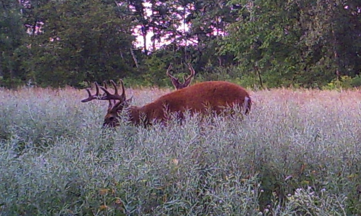 We watched these two bucks all summer long and I was able to set up on the 10pt on the first day of the 2011 season.