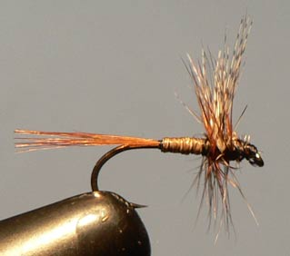 Cornie's Quill Fly Pattern