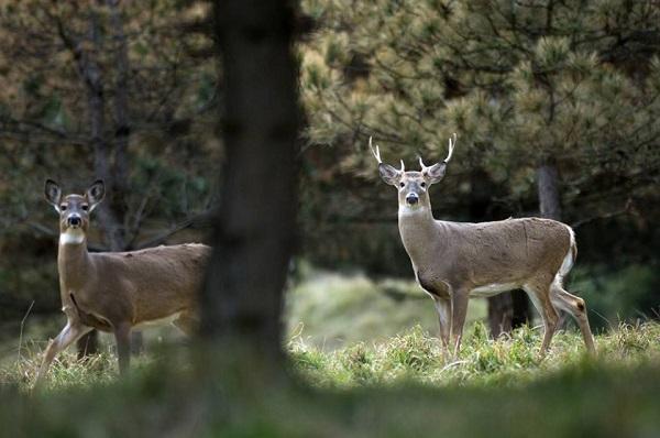 dnr deer