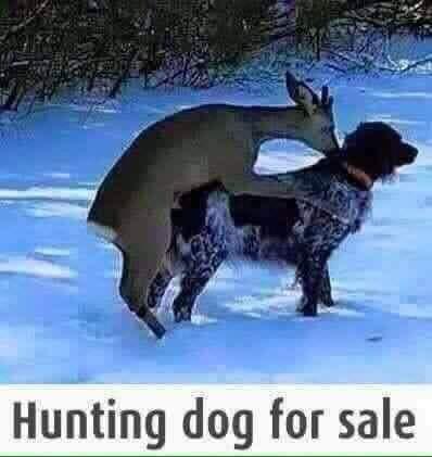 dog for sale.jpg