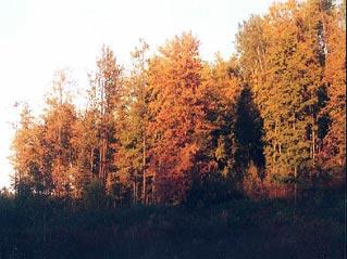 fallcolors on bear hunt