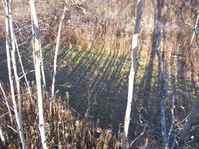 Food Plot Fence Line