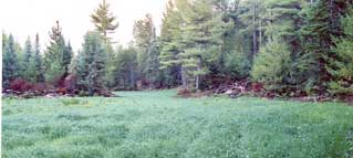 food plot in Michigan