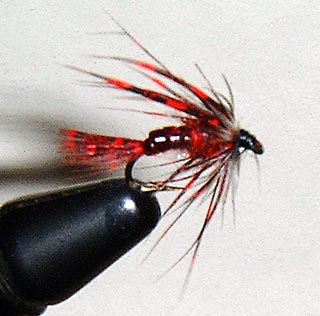 guinea red fly pattern