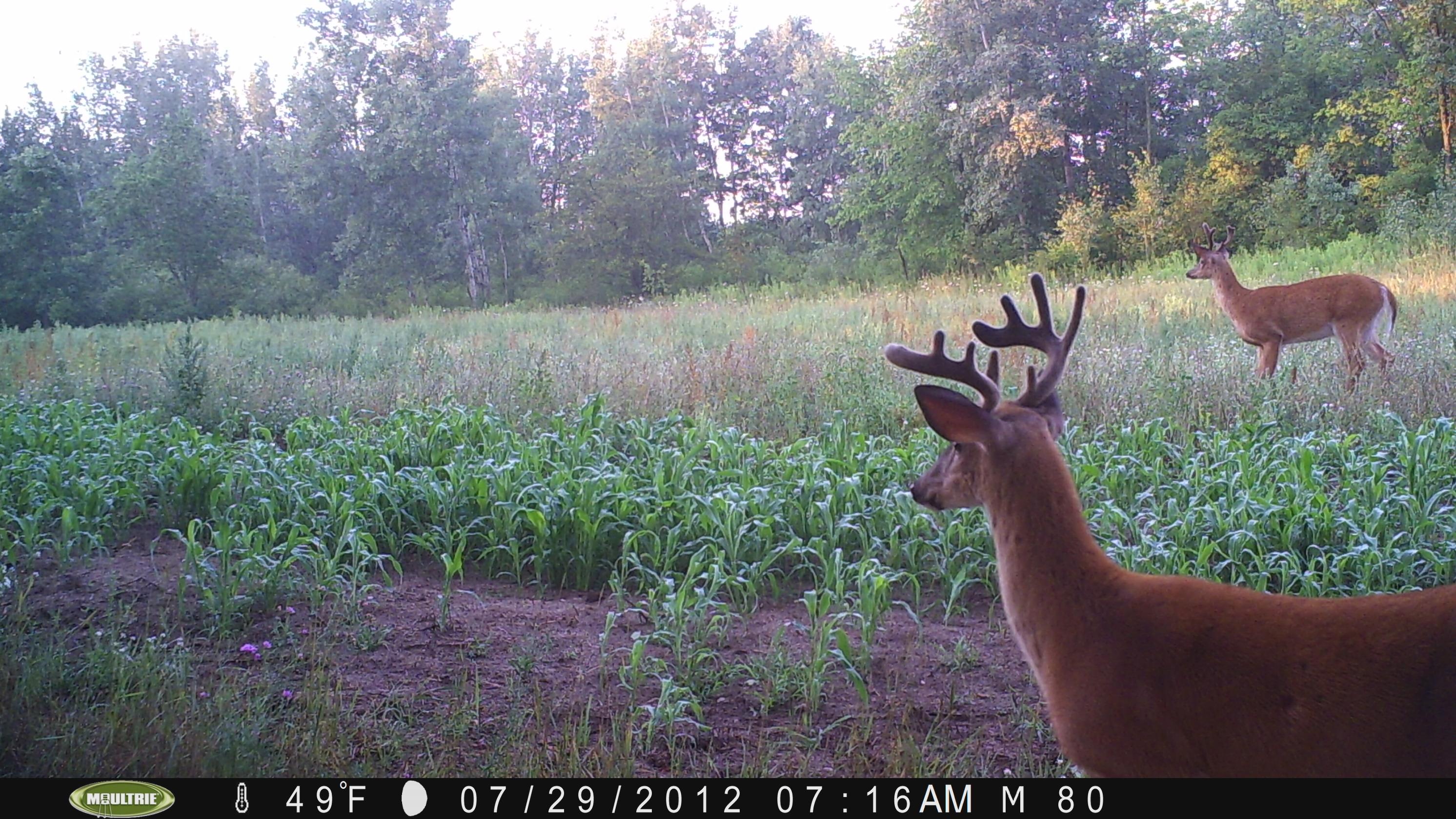 buck hit list