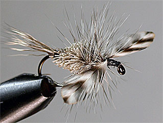 Michigan Caddis Fly Pattern