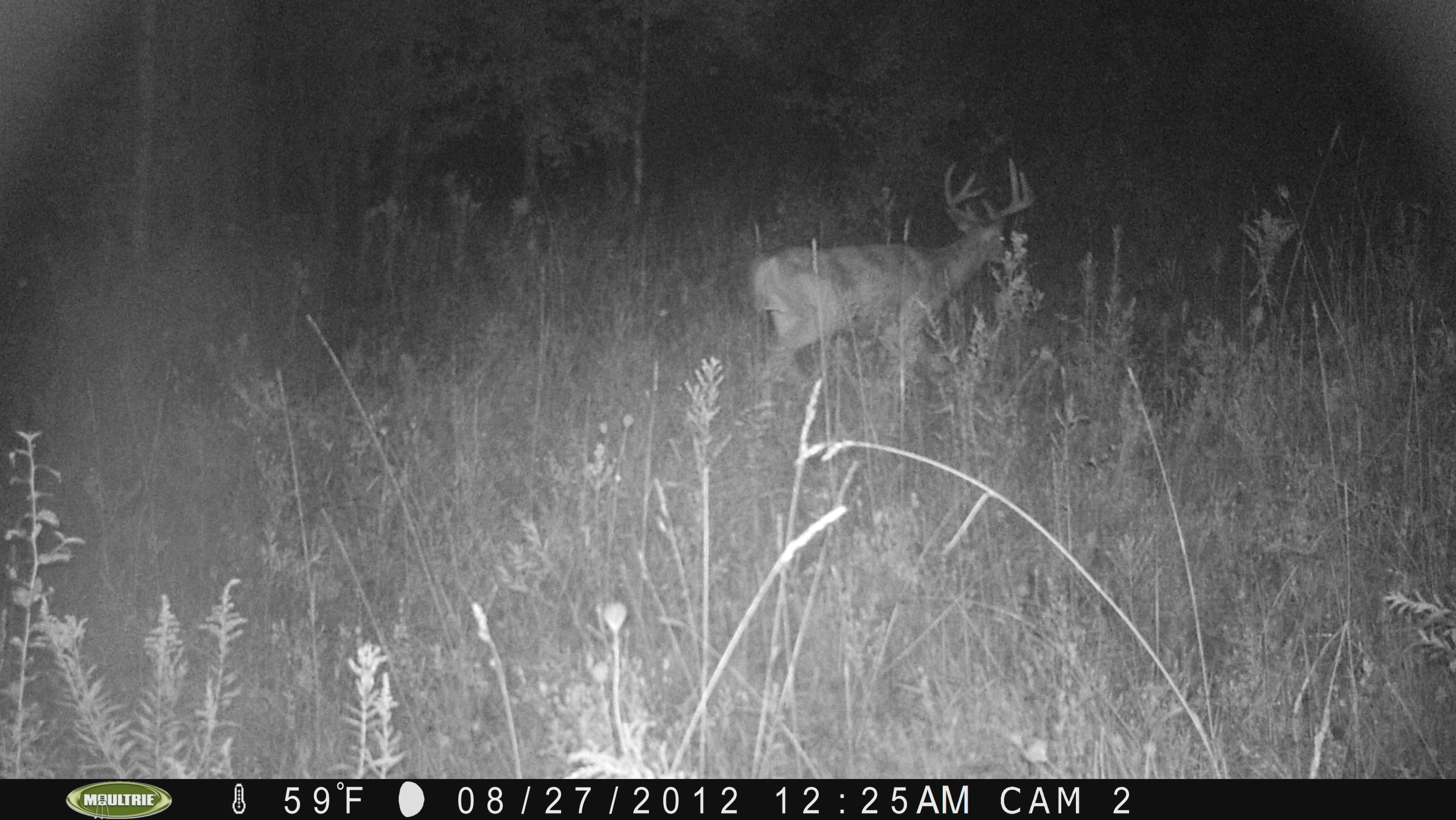 Knowing this 8pt was in the area made it much easier to pass on those borderline bucks that really needed that extra year.