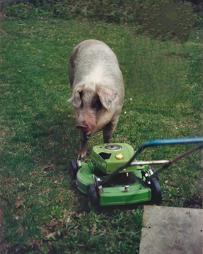 piggy_3.png