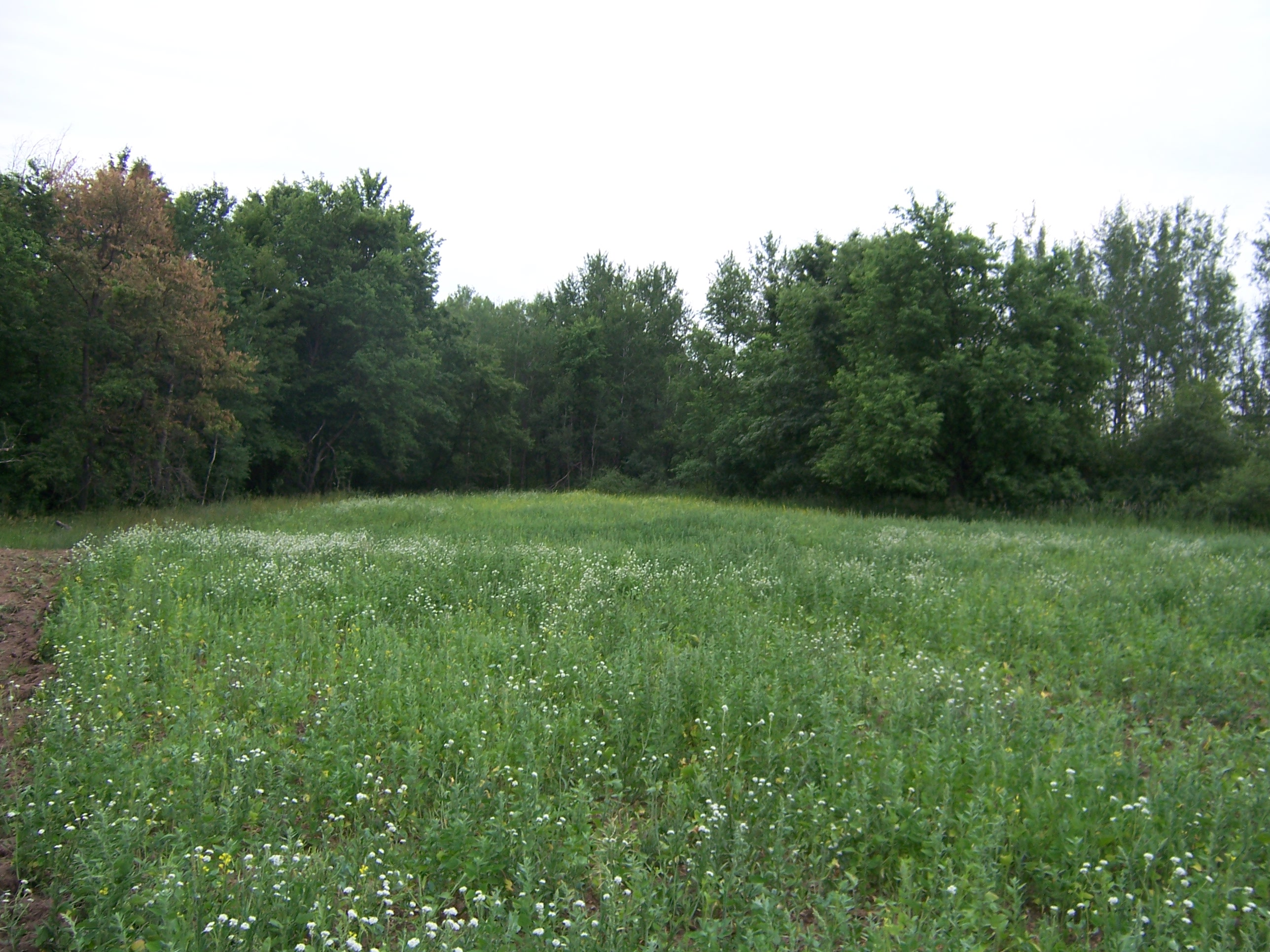 food plot drought