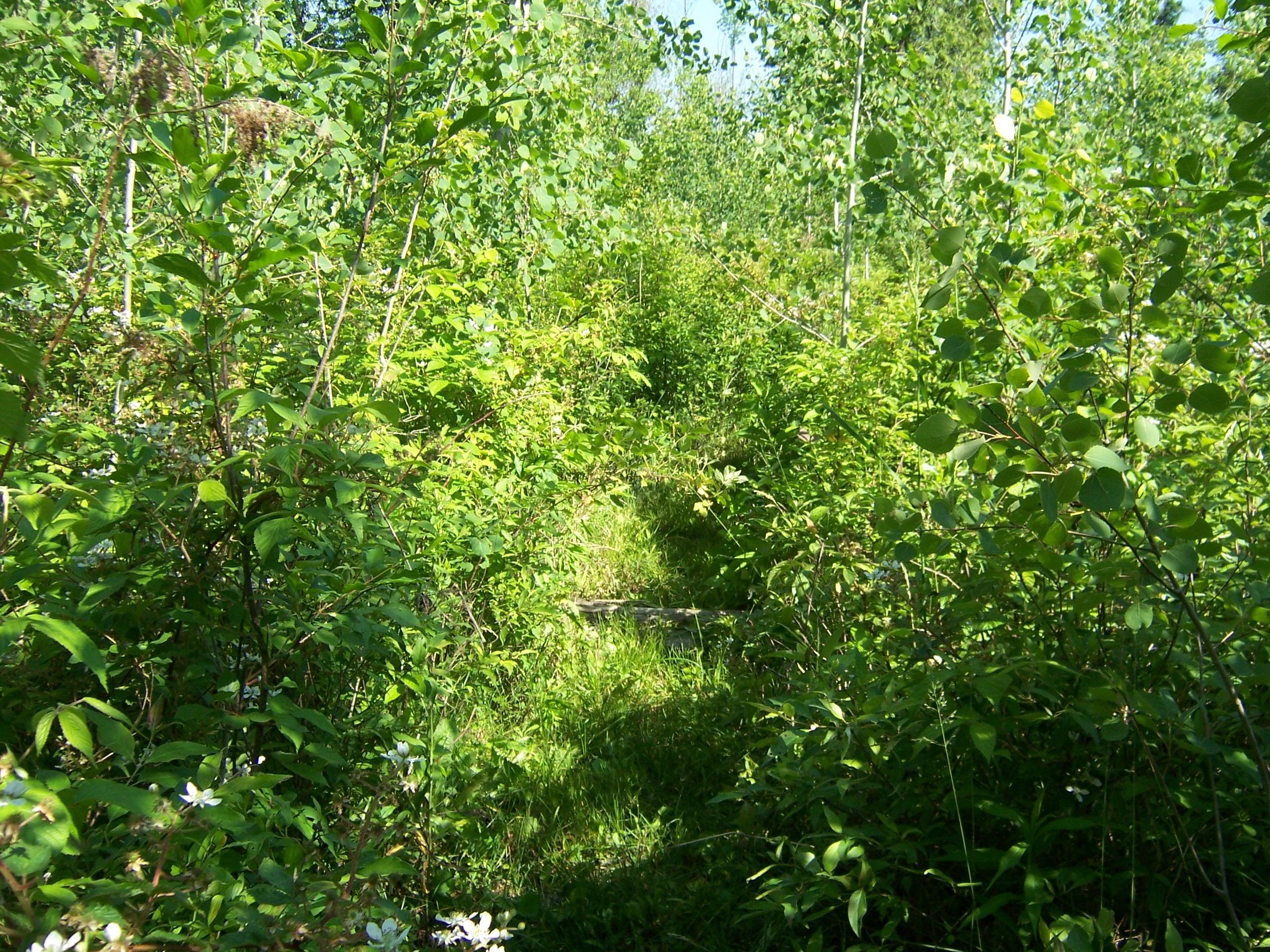 Southline Plot trail 6-10 (2)