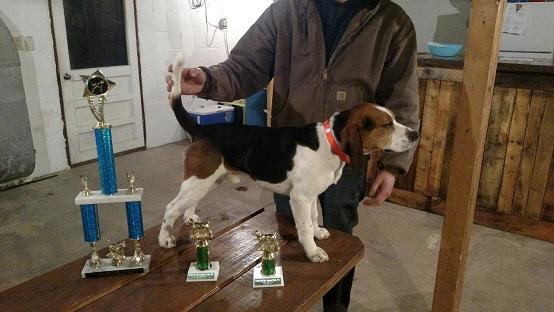 Akc Beagle Pups For Sale Michigan Sportsman Online Michigan