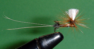 Tim's Brown Drake Fly Pattern