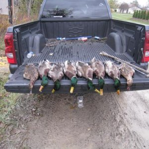 """09"" feild hunting, two man limit in 20 min.'s"