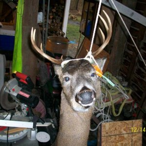 2009 bark river buck