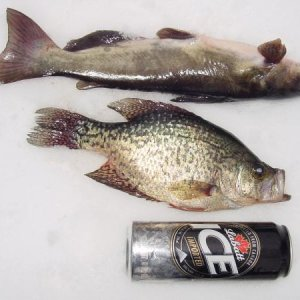 fishsticks !  ice ice baby !! 24 ounce can-drink it and fish magically appear ! 13.5 inch crappie and 18 .5 inch