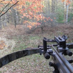 from the treestand