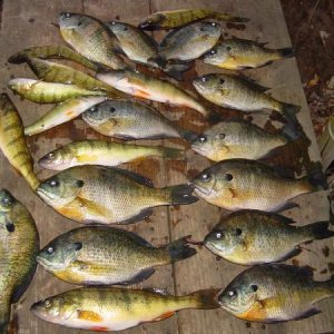 oct  30 2010  devils lk. near halloween time is my devils night ! is a tradition for me to fish and get my treats !