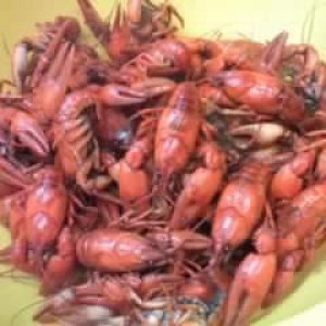 Cooked crayfish.    All varieties of crayfish will turn bright red when cooked.