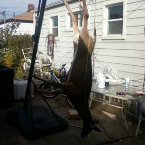 Living in the city... this is how we have to do it lol. hang the deer from the portable basketball hoop! Our neighbors love us haha..