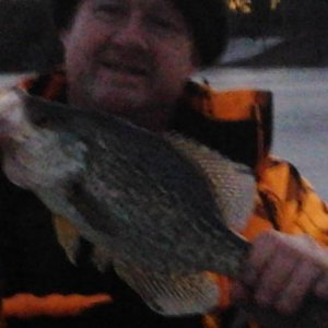 "13.5 inch crappie caught on clear lk. using 1"" gulp alive minnow"