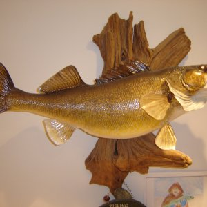 Walleye Mounts