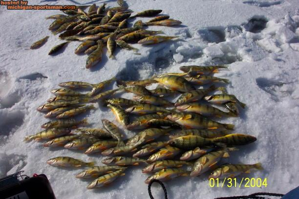 1 31 04 sang limit michigan sportsman online michigan for Michigan fish size limits