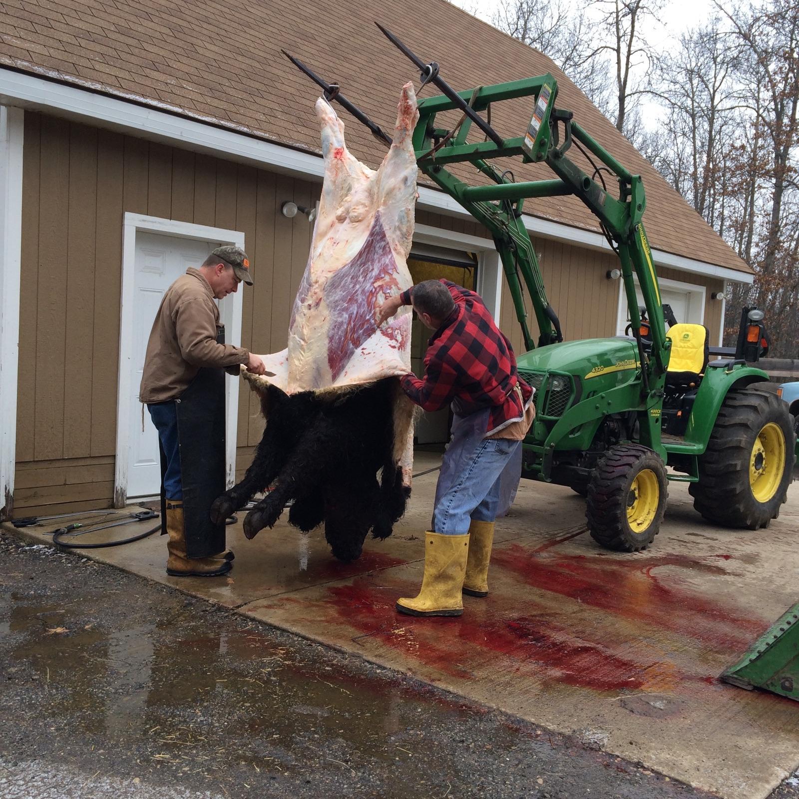 Bison hunting locations | Michigan Sportsman - Online Michigan