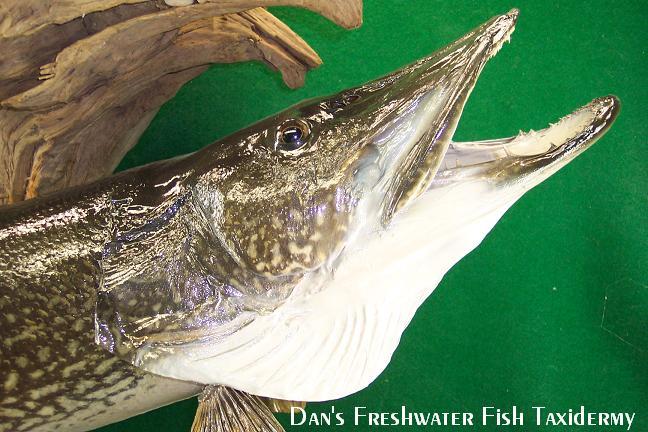 northern michigan hunting and fishing show